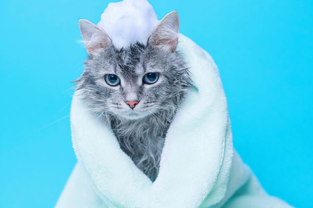 hay otras soluciones en lugar de perfumar al gato