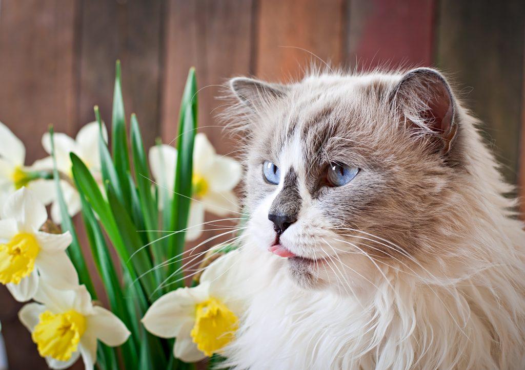 motivos por los que no deberías perfumar al gato