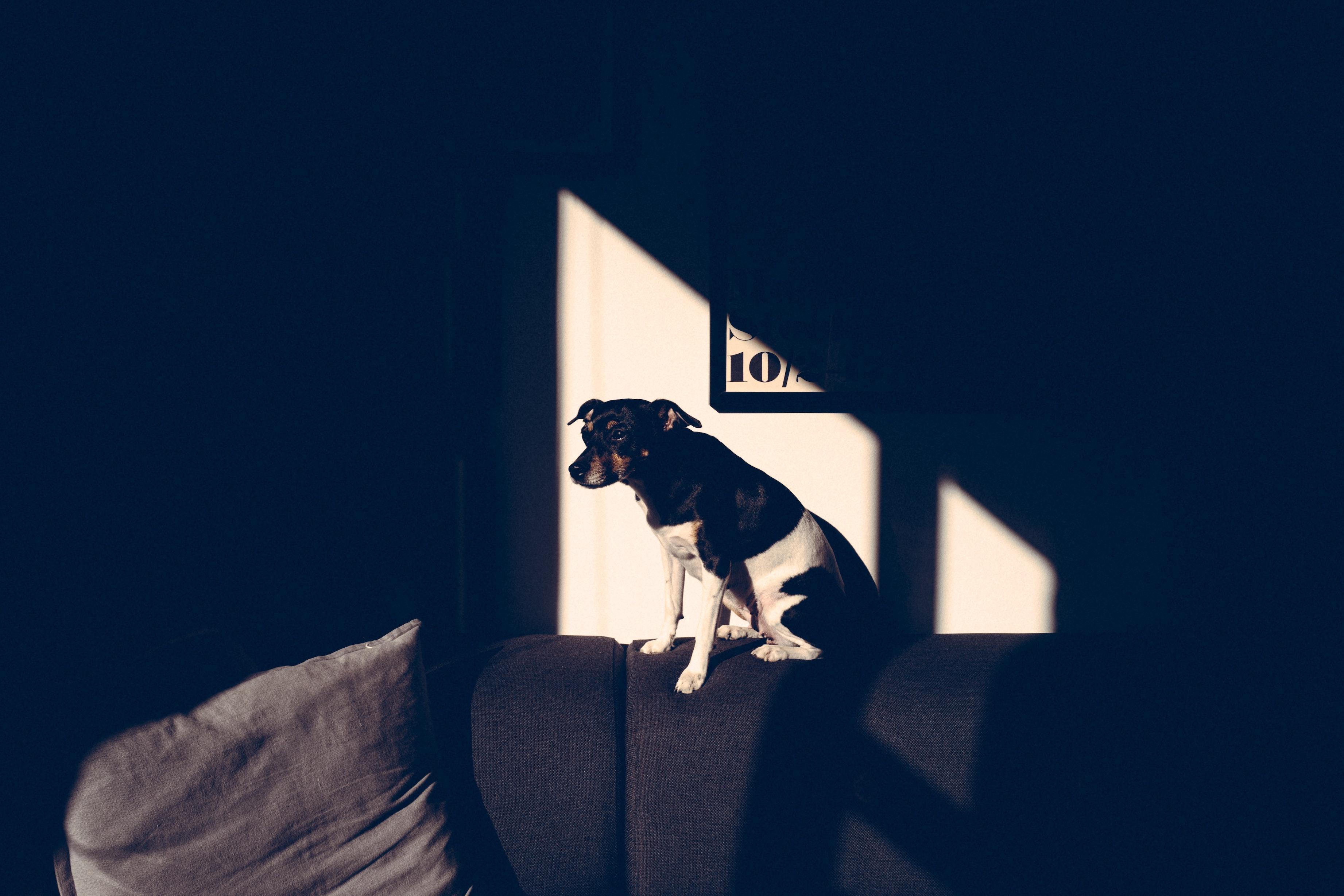 Un perro a la luz