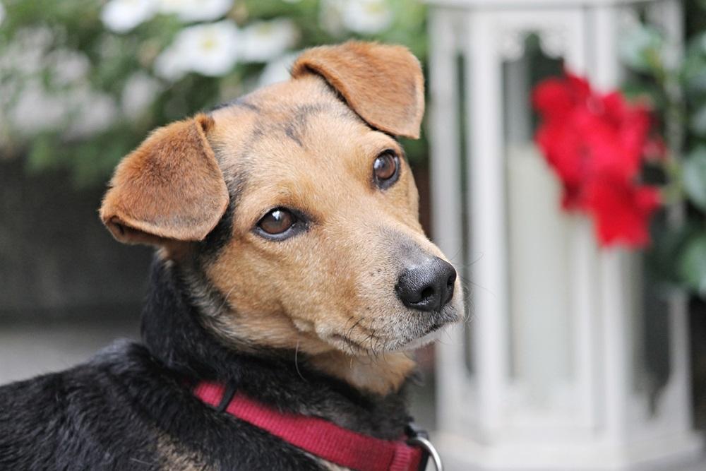 Los ojos de los perros