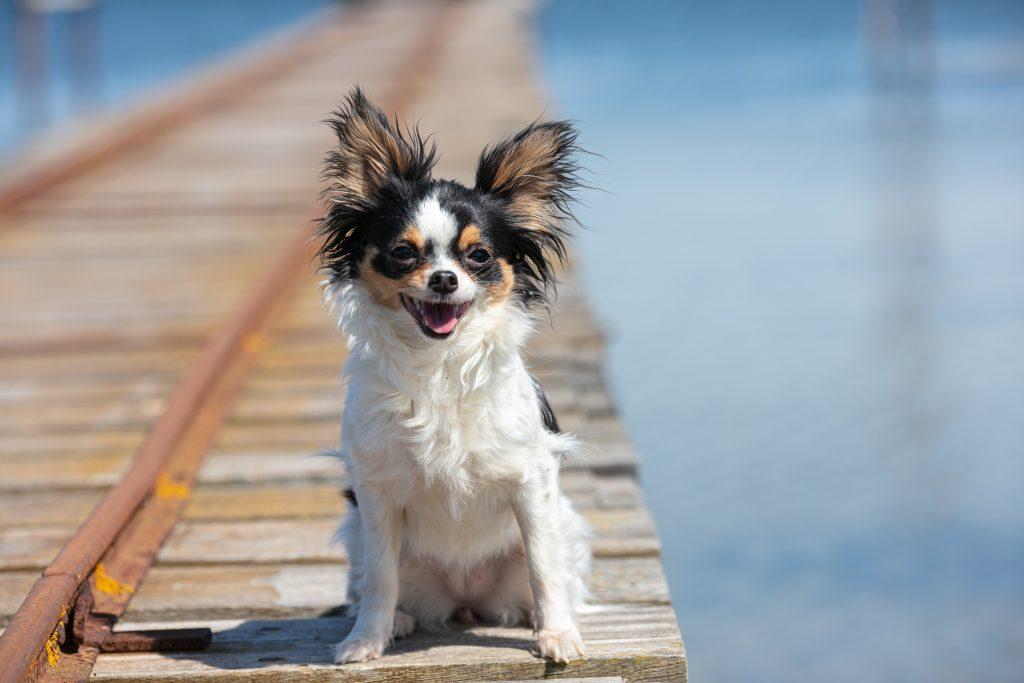 mejores opciones sobre qué hacer con las mascotas en vacaciones