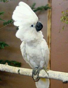 aves posando en un palo gozando de lo lindo
