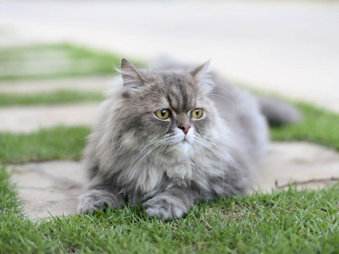 Cómo hacer que tu casa sea un lugar feliz para tu gato
