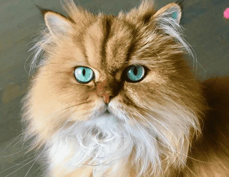 Los mejores nombres de gatos machos