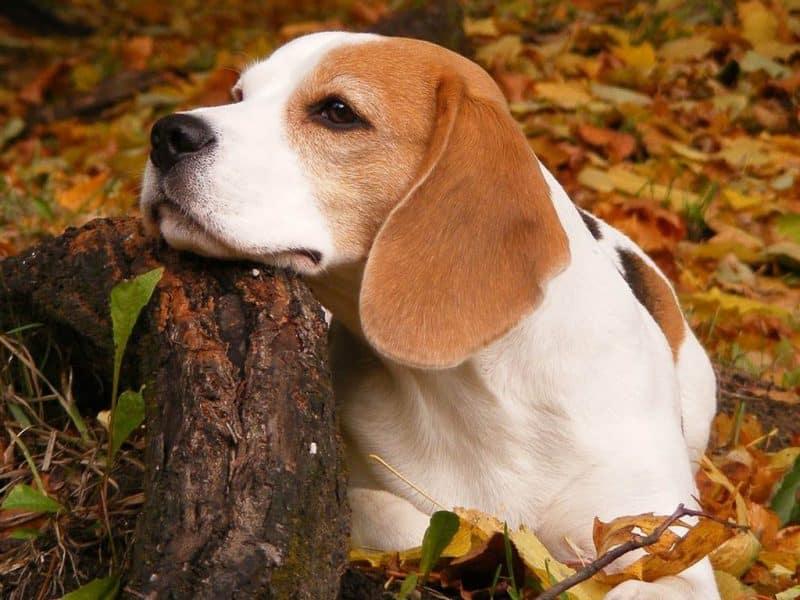 Cómo preparar a tu perro para que no sufra ansiedad por separación