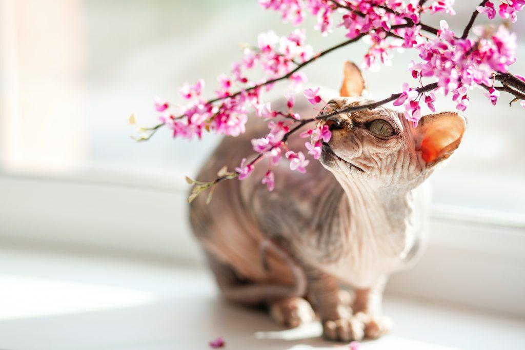 se puede perfumar al gato pero no es recomendable