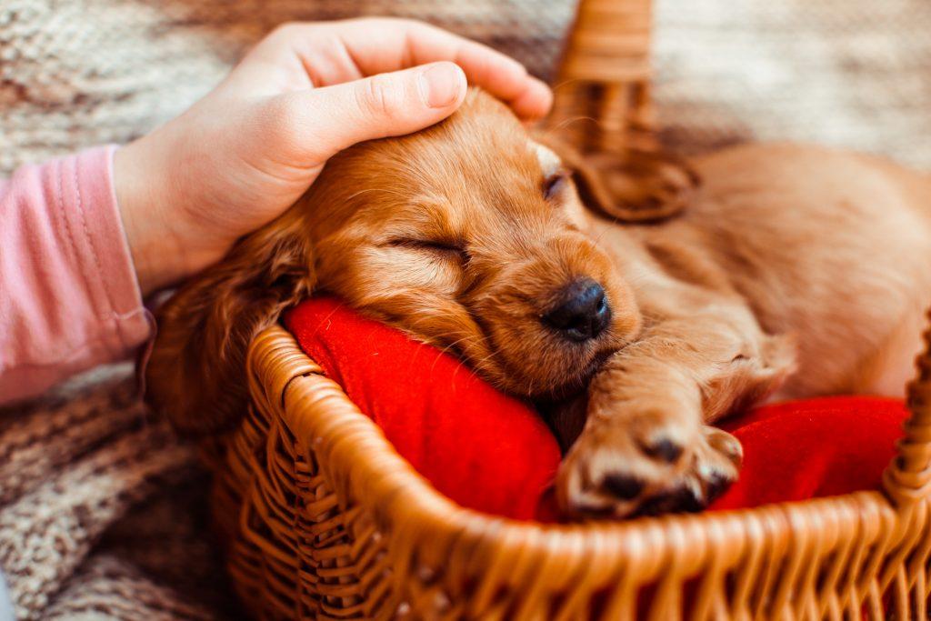 da indicaciones sobre qué hacer con las mascotas en verano