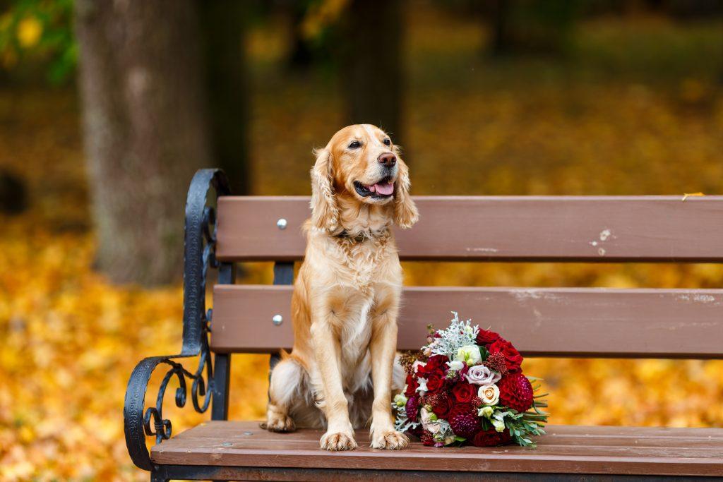 asegúrate de que dejan estar a tu perro en tu boda