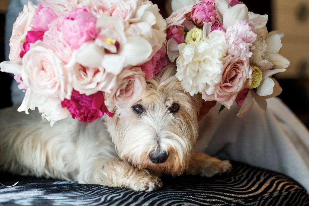 quiero que esté mi perro en mi boda