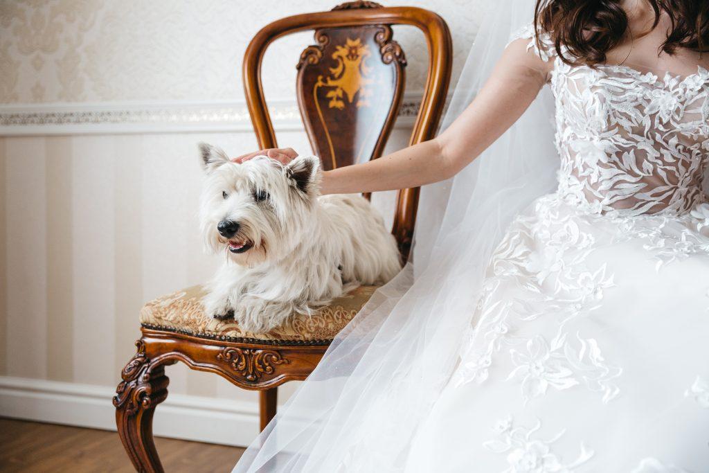 cómo hacer que esté mi perro en mi boda