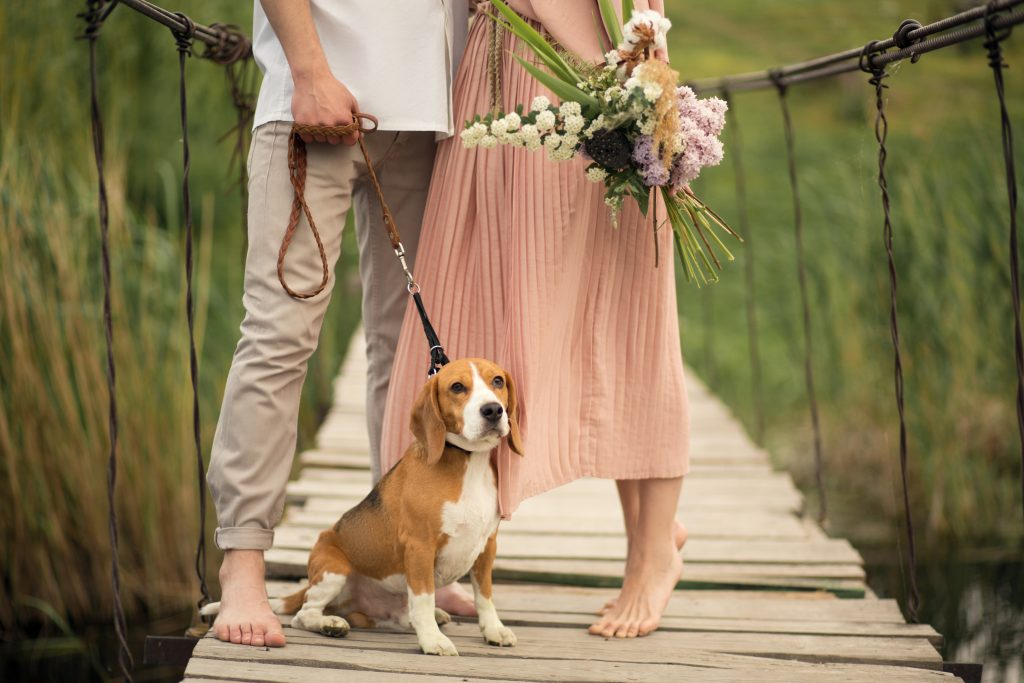 tu perro en las fotos de tu boda
