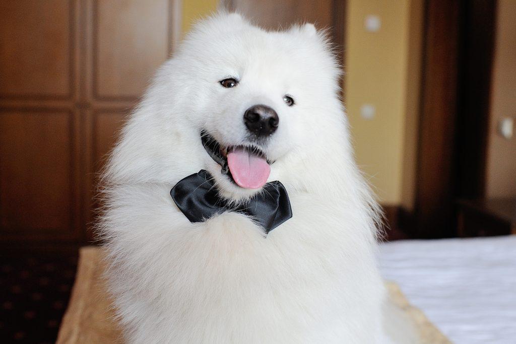 visto a mi perro en mi boda o mejor no