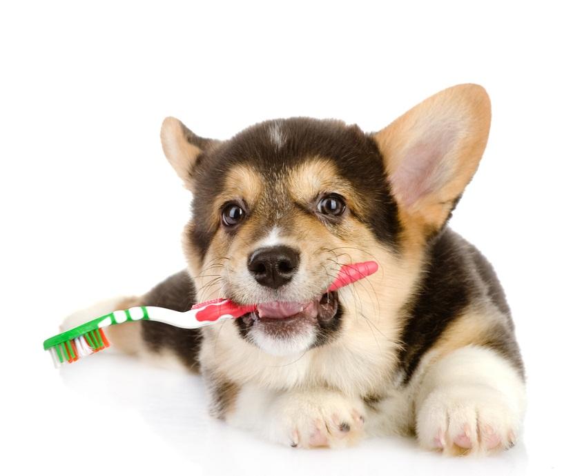 Entrenar a tu perro desde el primer dia