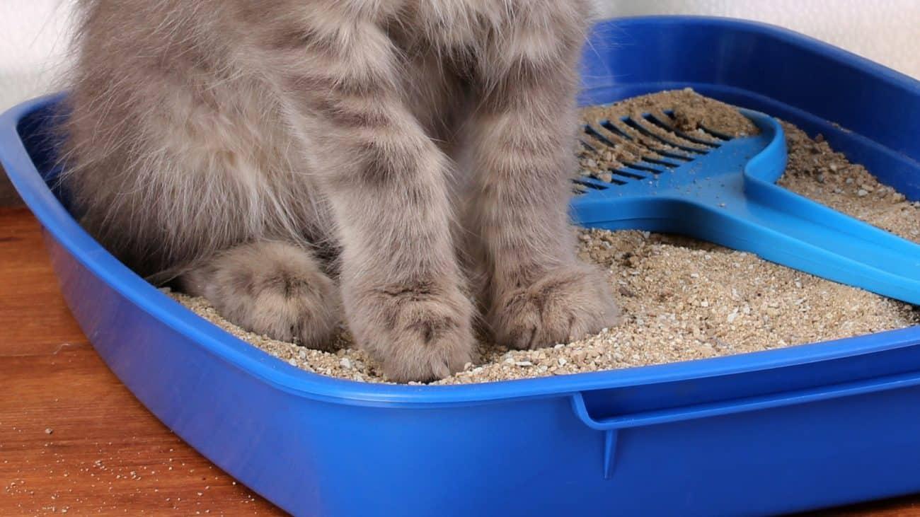 Cómo elegir la mejor arena para gatos en función de tu estilo de vida