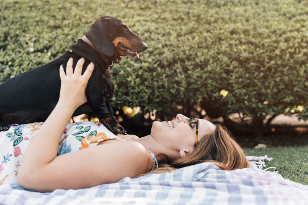 ¿Cuál es la mejor cama para tu mascota?