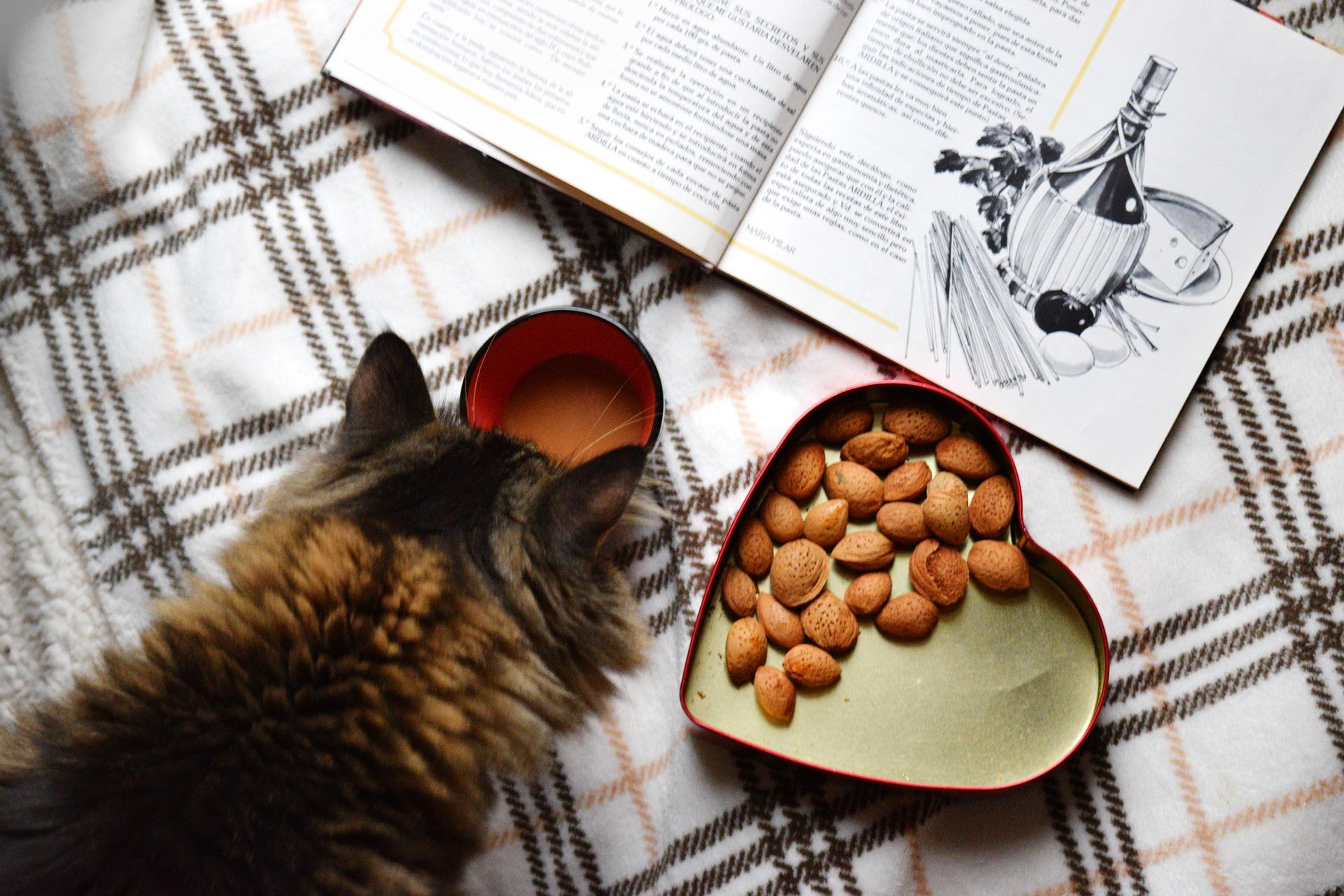 Alimentos naturales para tu gato