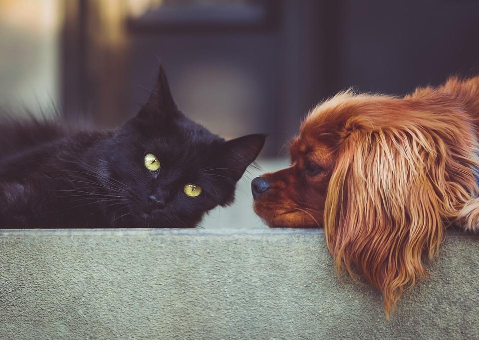 Alimentos para mascotas: cómo darles una dieta saludable