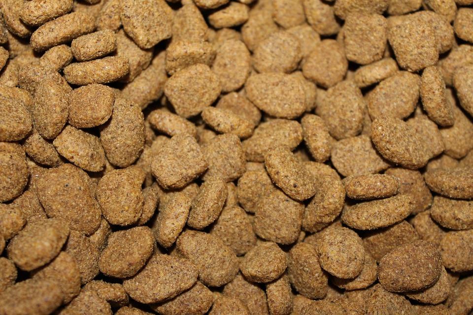 Cómo elegir la mejor comida para tu perro