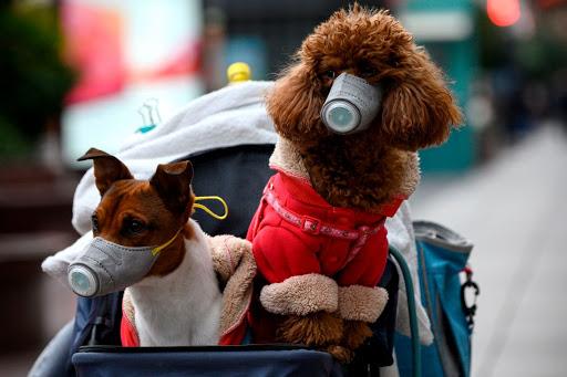 ¿Pueden los perros tener coronavirus? Todo lo que necesitas saber