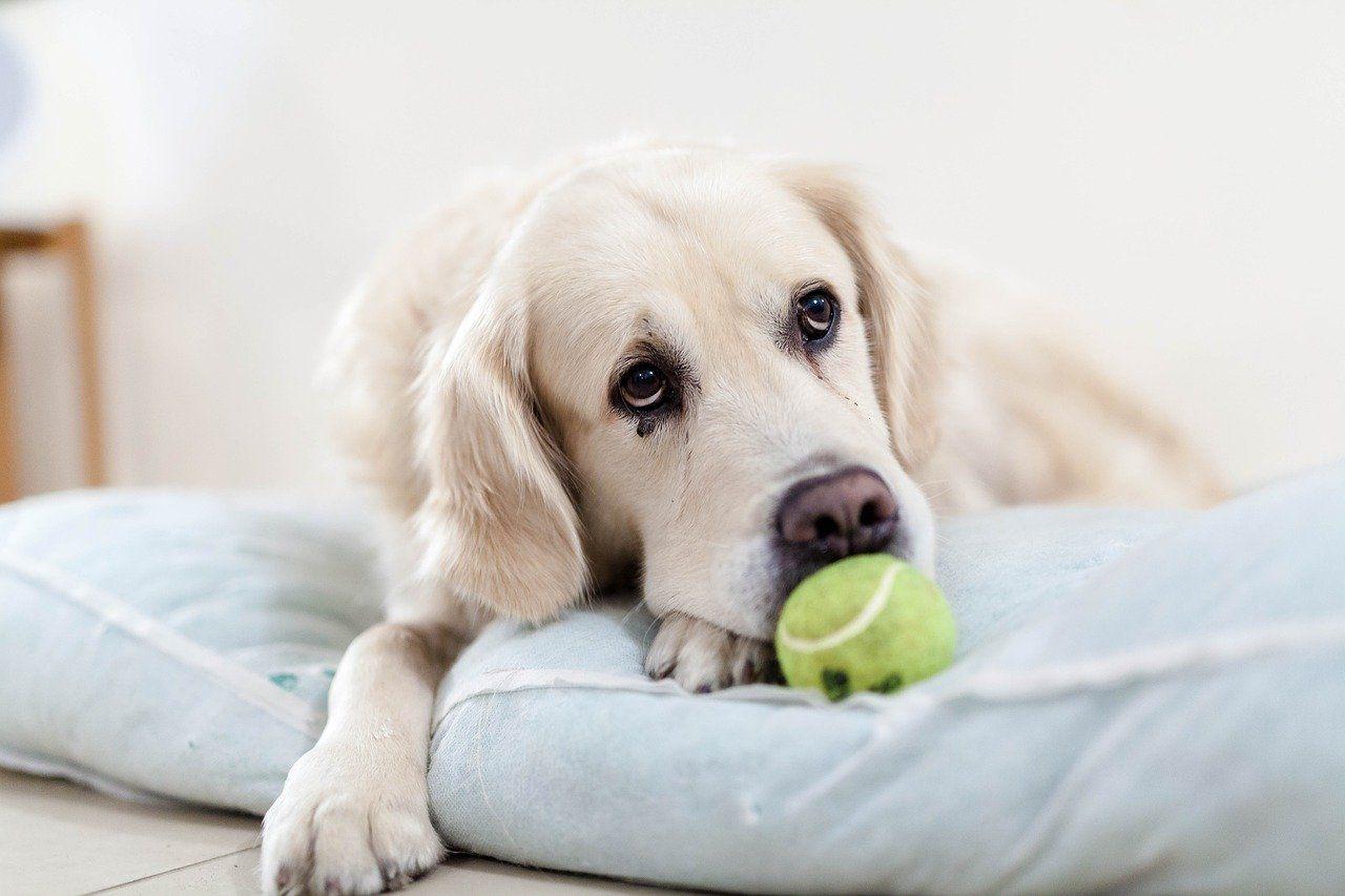 5 juegos para perros en casa muy útiles en tiempos de coronavirus