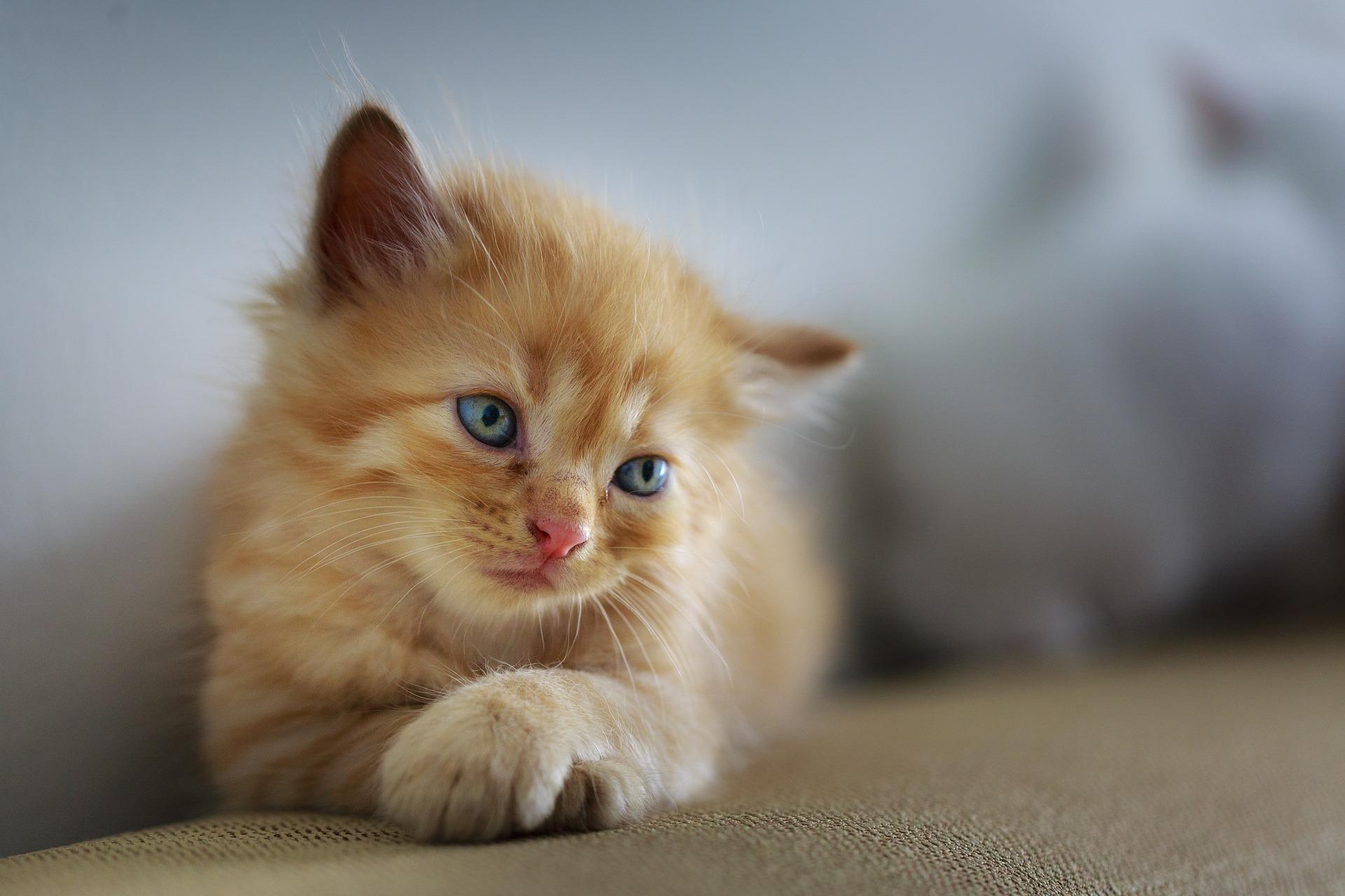 Como convivir con un gato