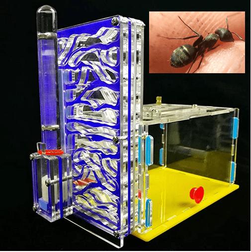 4 nidos de hormigas de metacrilato recomendados