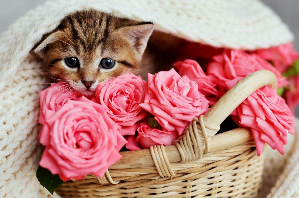¿Es bueno perfumar al gato?