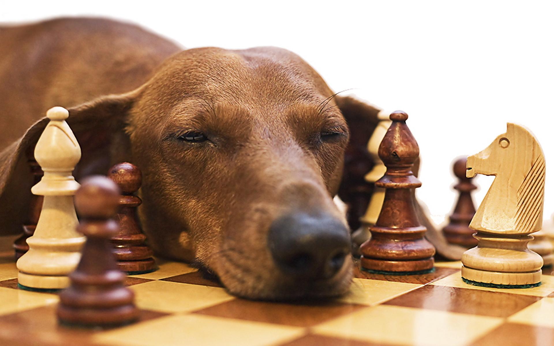 Juegos de estimulación mental para perros