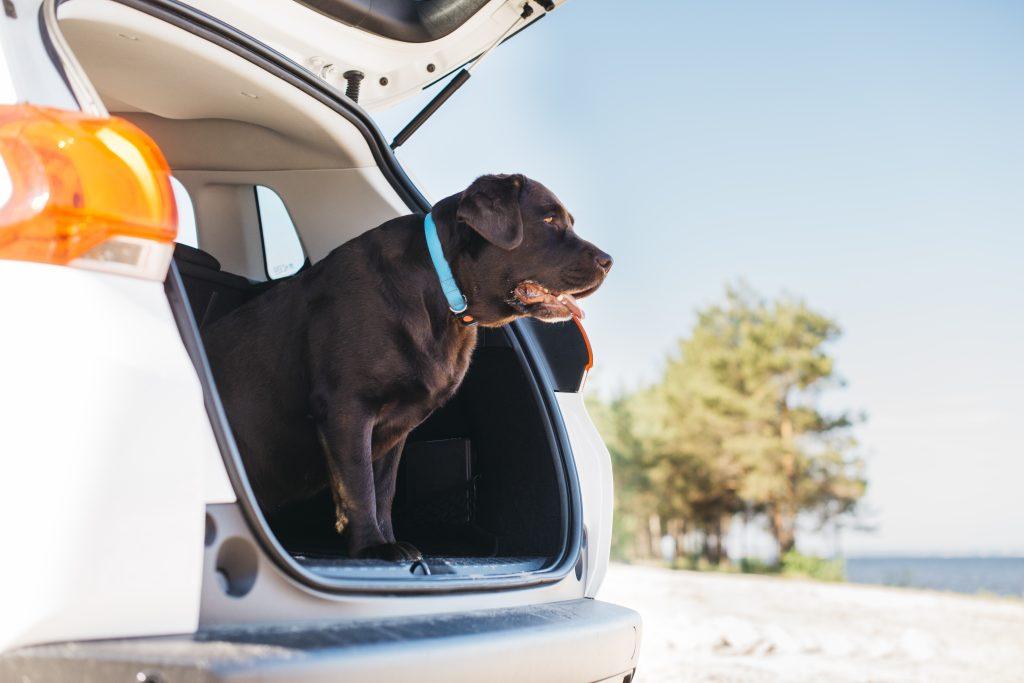 Mascotas y vacaciones ¿ Que hacemos ?